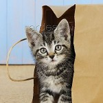 JD-20684 Cat - Kitten in paper bag